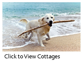 Marvelous Pet Friendly Self Catering Holiday Cottages Bridlington Download Free Architecture Designs Fluibritishbridgeorg